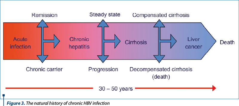 Figure 3. The natural history of chronic HBV infection